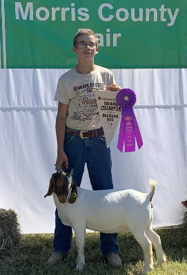 Champion Breeding Doe - Lakoddah Downes