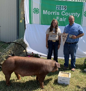 Champion Market Hog - Carissa Dalquest