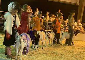 Goat Costume Contest